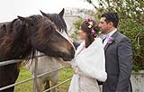 Newly married couple take a moment out to pet some horses near Doolin, Co. Clare, on the west coast of Ireland.